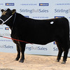 Stirling AA Res female