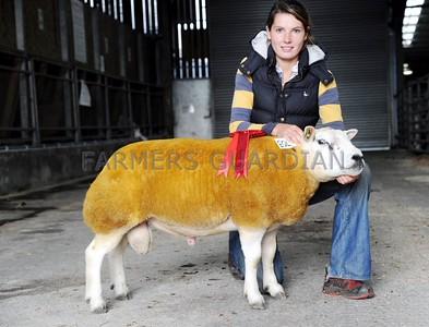 Skipton multi breed sheep sale October 2014