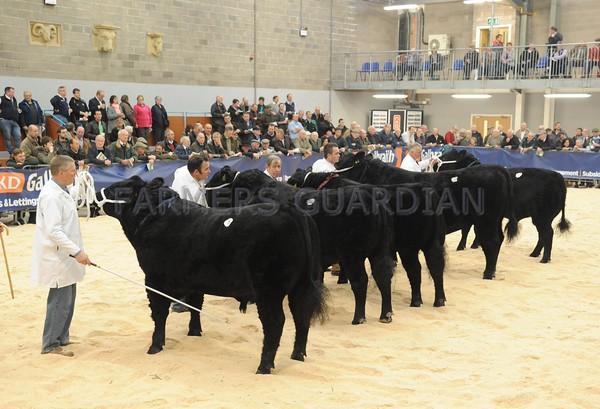 Stirling Bulls October 2014