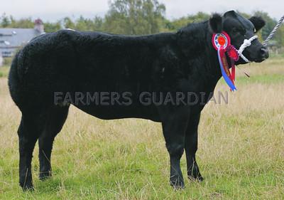 Stirling Show & Sale of Suckled Calves Sept 2014