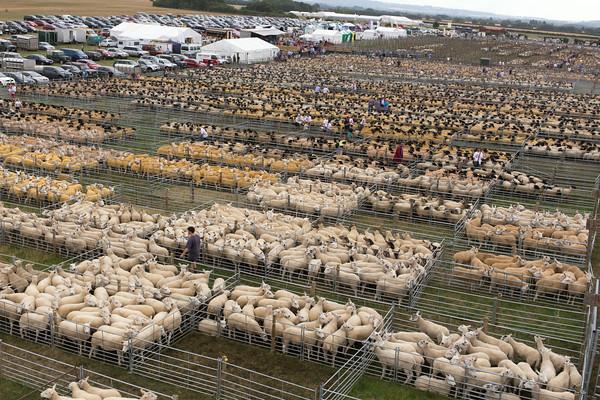 Thame Sheep Fair 2014