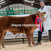 Overall Champion from J Smith Jackson - £5800 - Kirkby Stephen Classic March 2020