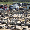 7.8.2020 <br /> ©Tim Scrivener Photographer 07850 303986<br />      ....Covering Agriculture In The UK.