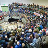 Lot 26 a Limousin cross heifer from Michael Wynne weighing in at 576kg, went on to sell for £5.00 per KG.