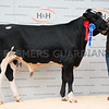 Reserve champion of the day Warnelview Hunt from K.J. and C.S. Wilson.