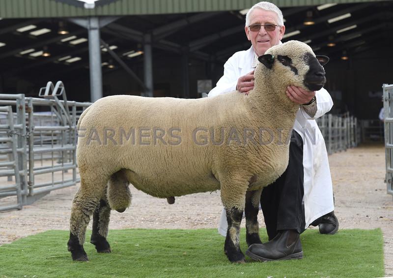 Hamps shearling ram