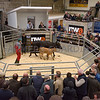 A Limousin cross heifer with Limousin calf at foot from E. J. Hodgson and Son sold for the sale's top price of £2,050.