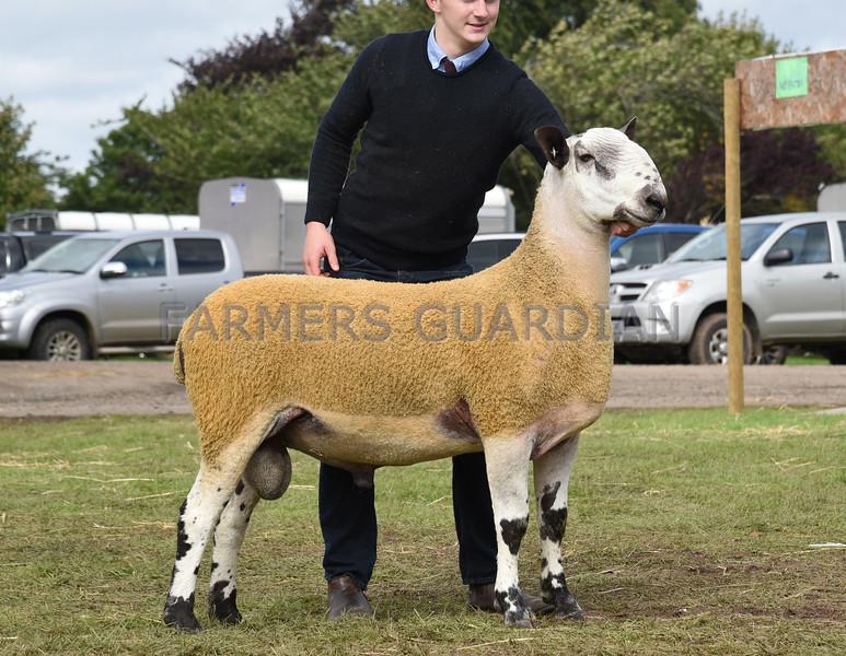 19681808 Kelso ram sales Sept 2017 - farmersguardian