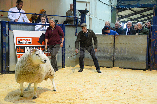 Lockerbie Cheviot Ram sale Oct 2017