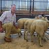Malton lamb champs