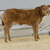 A Limousin heifer from K. I. and E. and H. I. Jones of Bryn Ddraenen, Padog, Betws y Coed sold for £4,600.