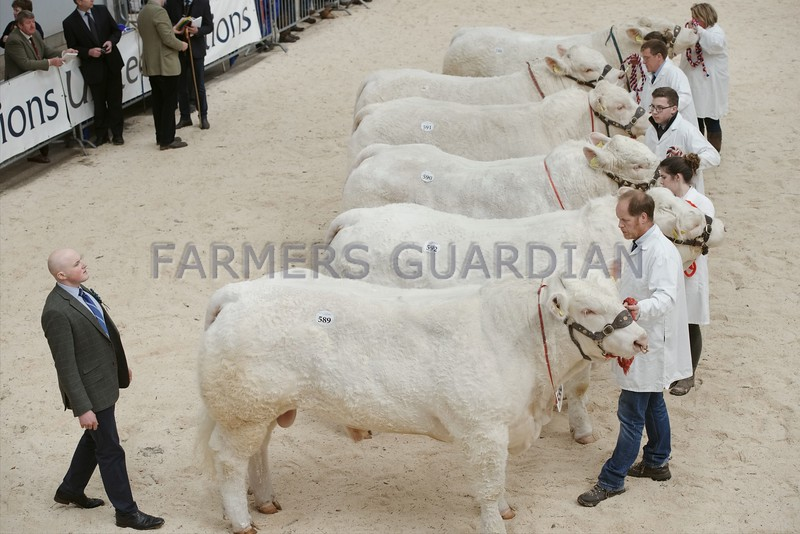 Judge Ellis Mutch, Burnside of Whiefield, Forglen, Banff seen judging the Charolais Bulls at Stirling May Sales.
