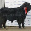 Stars of the Future 17  Lot 124 From HM Queen, Balmoral