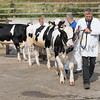 Wexham Cup bull show and sale, Beeston.