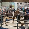 Whartonspool Adventure Red from A. J. Nash sold for 2,900 gns.