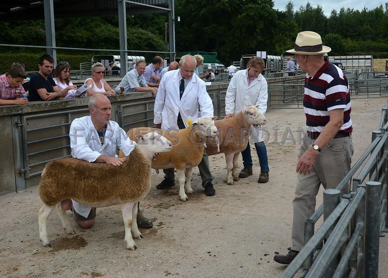 British Berrichon sheep Worcs 8.7.17