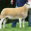 Worcester Sheep Sale<br /> Lot 30 owned by Miss n Cartwright sold for 1800gns<br /> Picture Tim Scrivener 07850 303986<br /> ….covering agriculture in the UK….