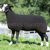 Worcester Sheep Sale<br /> Lot 378 Beech Hay Elegance owned by Mr & Mrs R Grinnell sold for 2000gns<br /> Picture Tim Scrivener 07850 303986<br /> ….covering agriculture in the UK….