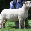 Worcester Sheep Sale<br /> Lot 125 sold for 800gns<br /> Picture Tim Scrivener 07850 303986<br /> ….covering agriculture in the UK….