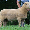 Worcester Sheep Sale<br /> Lot 75 Reserve overall Champ sold for 750gns<br /> Picture Tim Scrivener 07850 303986<br /> ….covering agriculture in the UK….