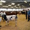 Brecon Show Potentials 14/2/15