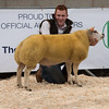 A ram lamb from D. E. Owen of Rowen, Conwy, North Wales sold for 1,800 gns.