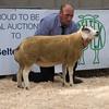 The top price of 4,200gns. A ewe from Richard T Wood of Tweedsmuir, Biggar, South Lanarkshire.