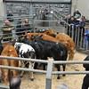 Judging best steer class