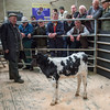 The top price rearing calf, a bull calf at £298 from J. Hogarth of Slyne, Lancaster.