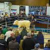MTH Beeston Suckled Calves-6049