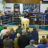 MTH Beeston Suckled Calves-6044