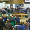 MTH Beeston Suckled Calves-6008