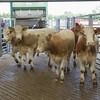DINGWALL MART 15TH JULY