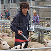 Monmouth Livestock Auct's 21/08/15