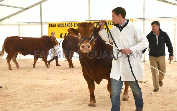 Newark Limousin Sale 10/10/15