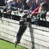 Skip Dogs 18