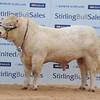Stirling Char 10,500