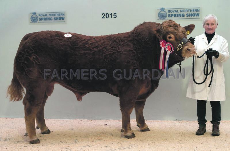 "Champion Limousin Bull "" Shannas Illusion"" from  Mr and Mrs J. Penny, Shannas, Mintlaw, Peterhead."