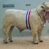 Aberdeen Spring ShowChampion Charolais Bull