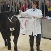 THAINSTONE CLASSIC 15 LOT 15 IN YOUNG FARMERS CLASS