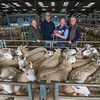 The best pen of 20 or more White Welsh Mules from Marcus Williams of Caersws, P0wys. (L-R) Judge Parry Walters, Welsh Mule Society president Ceiriog Jones, Marcus Williams, and judge George Chandler.