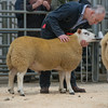 Welshpool Muiti Breeds 014