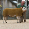 The reserve champion Texel, Clun Viking Warrior from A. E. Williams and Son of Newcastle-on-Clun, Craven Arms, Shropshire.
