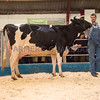 The top price of £3,500 in the Western Holstein Club sale, Wyndford Sid August 26th from Wilfred Maddocks Ltd., of Great Chatwell, Newport, Shropshire.