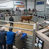 Lot 907. A Hereford cross store selling for £790.