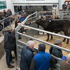 Lot 901. An Aberdeen Angus cross store selling for £980.