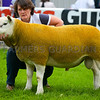 A Texel ram from Ballaglonney Ltd, Ballagloney Crosby, Isle of Man sold for 5,200gns.