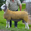 A Blue Faced Leicester ram from M and N Gray, Low Espley, Morpeth, Northumberland sold for 7,800gns.