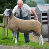 A Blue Faced Leicester ram from Miss S.A. Harding, Shrewbridge House, Nantwich sold for 4,400gns.