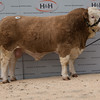 Denzies Fortune 14 from Barlow Brothers sold for  4,200 gns.